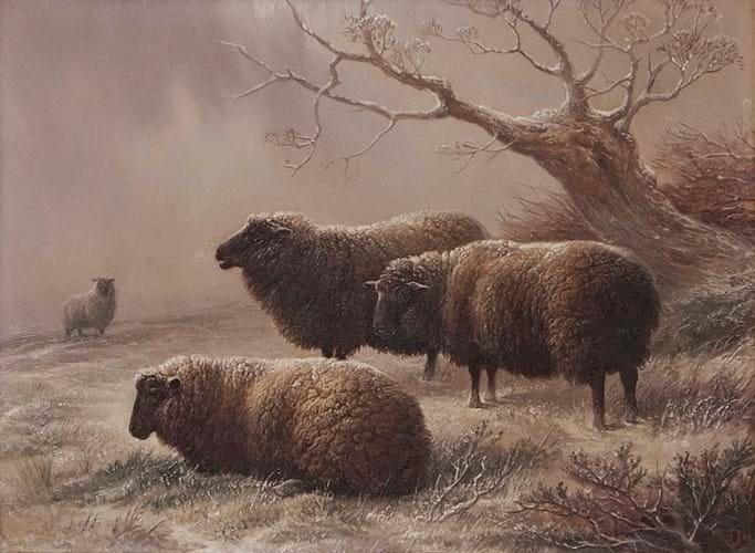 'Sheep in winter' by Charles Jones