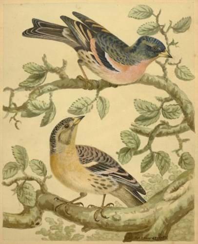 watercolour bird study