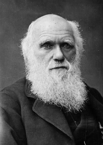Charles Darwin 1881 Barraud.jpg