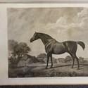 George Stubbs' 'Turf Gallery'