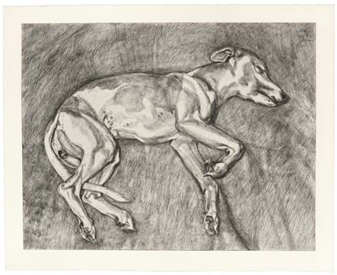 Lucian Freud etching of his whippet Eli